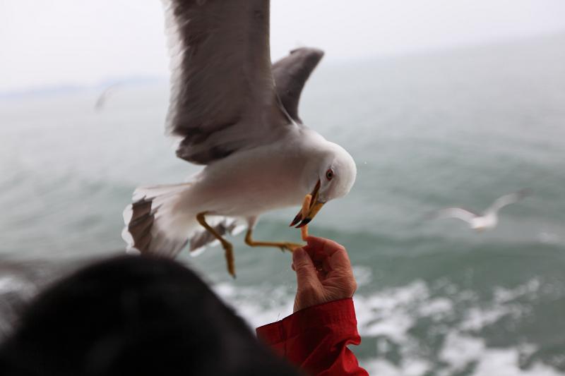 5/18翌朝10時に仙台港へ あいにくの雨、時間調整のため 松島一周の観光船に_a0160581_19153374.jpg