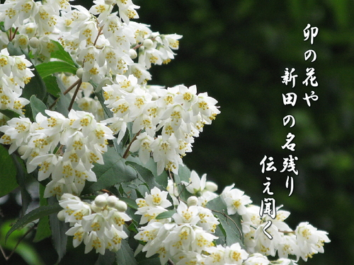f0137096_212819.jpg