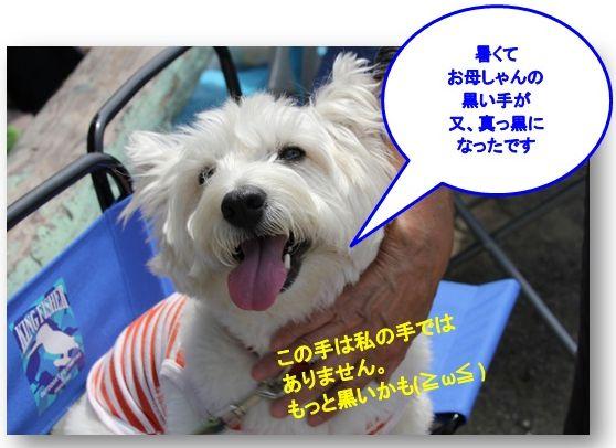 運動会、楽しかったね(^^)_a0161111_1302653.jpg