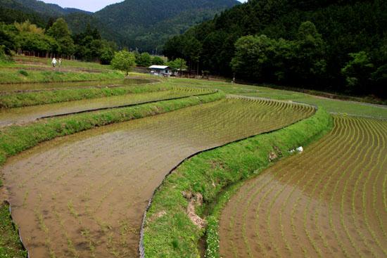 ヤングママさん達の米作り挑戦_e0048413_1864342.jpg