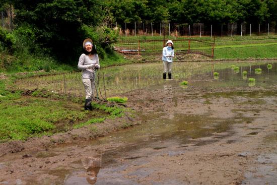 ヤングママさん達の米作り挑戦_e0048413_1865792.jpg