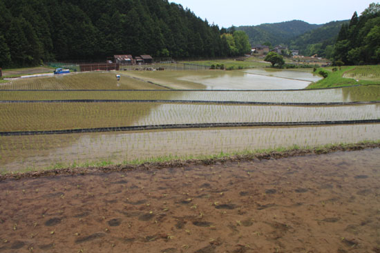 ヤングママさん達の米作り挑戦_e0048413_187491.jpg