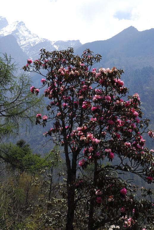 2012年5月 I Love Nepal. ネパールヒマラヤ再訪記(ランタン谷トレッキング)No.1_c0219616_211391.jpg