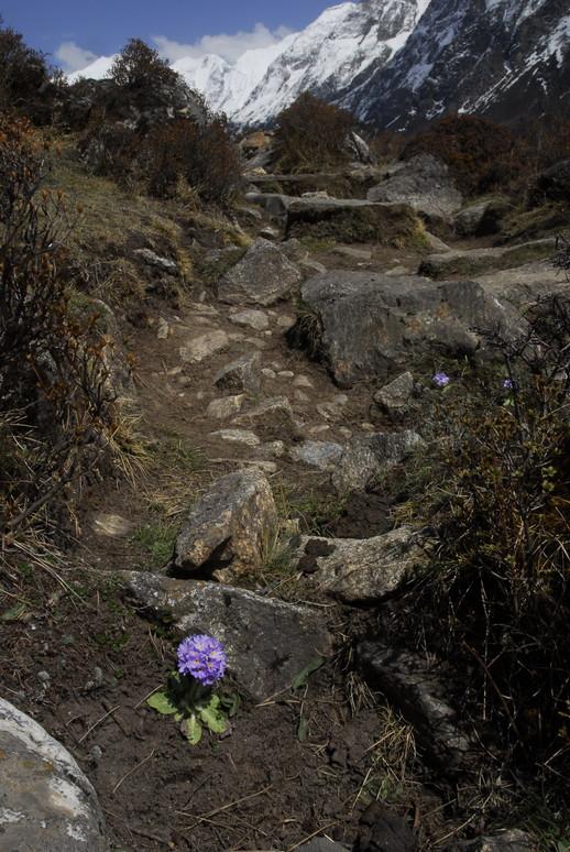 2012年5月 I Love Nepal. ネパールヒマラヤ再訪記(ランタン谷トレッキング)No.1_c0219616_21204826.jpg
