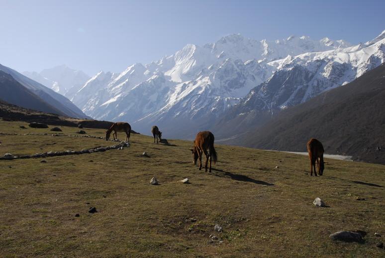 2012年5月 I Love Nepal. ネパールヒマラヤ再訪記(ランタン谷トレッキング)No.1_c0219616_21265962.jpg