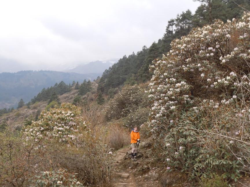 2012年5月 I Love Nepal. ネパールヒマラヤ再訪記(ランタン谷トレッキング)No.1_c0219616_2133816.jpg