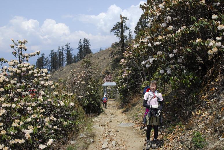 2012年5月 I Love Nepal. ネパールヒマラヤ再訪記(ランタン谷トレッキング)No.1_c0219616_21375994.jpg
