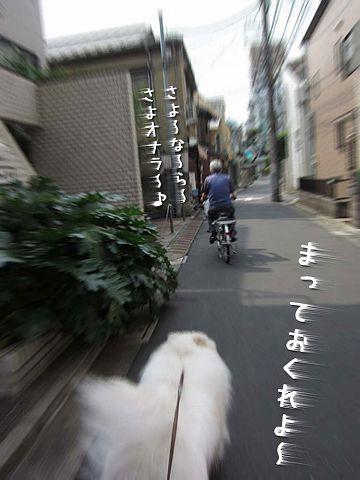 愛しのドン・クサオ_c0062832_5132080.jpg