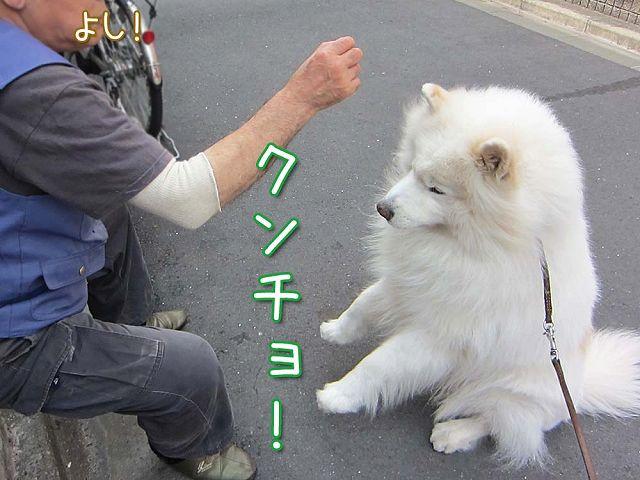 愛しのドン・クサオ_c0062832_51447.jpg