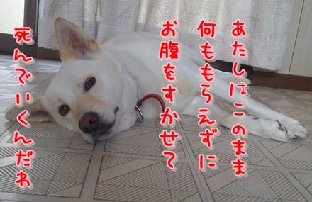 f0195543_2155832.jpg