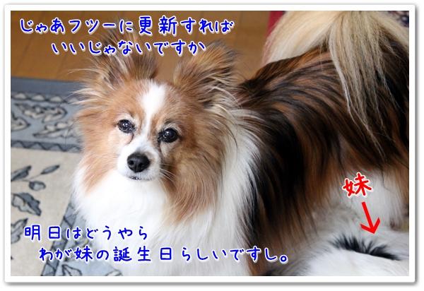 d0013149_2363834.jpg