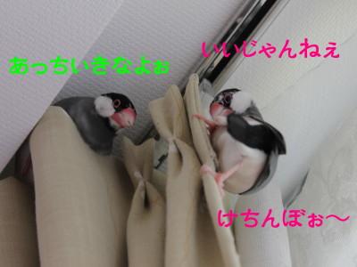 b0158061_20202997.jpg
