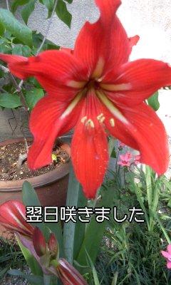 f0200871_0581198.jpg