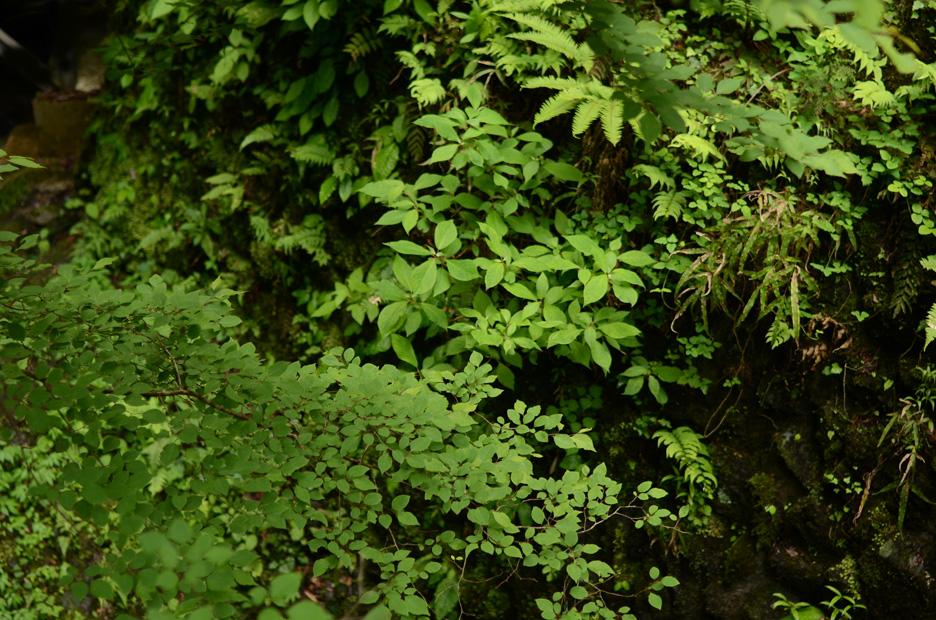森のリズム_b0194880_11263810.jpg
