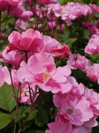 花フェスタ記念公園④_b0142989_22133273.jpg
