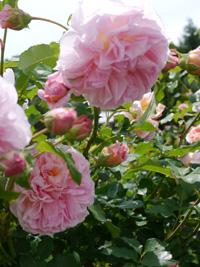 花フェスタ記念公園④_b0142989_22153862.jpg
