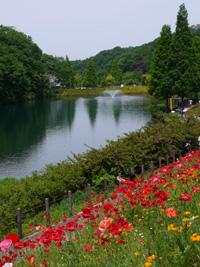 花フェスタ記念公園④_b0142989_2224139.jpg