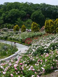花フェスタ記念公園④_b0142989_2265620.jpg