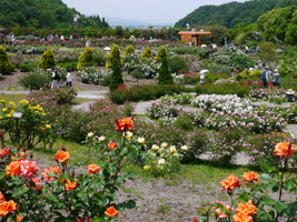 花フェスタ記念公園④_b0142989_227989.jpg