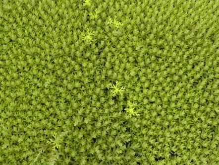 屋上緑化。_a0045293_9255615.jpg