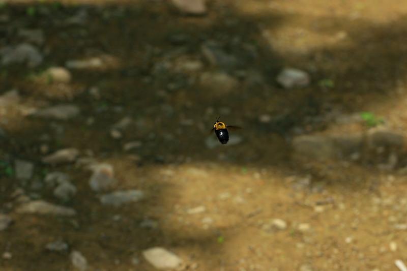 緑の谷を走る - 2012年・秩父 -_b0190710_2321756.jpg