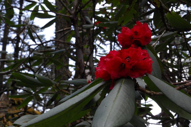 2012年5月 I Love Nepal. ネパールヒマラヤ再訪記(ランタン谷トレッキング)No.2_c0219616_21493272.jpg