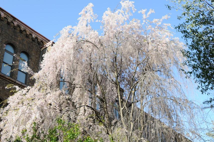 2012年5月 春の北大キャンパス_c0219616_22533462.jpg