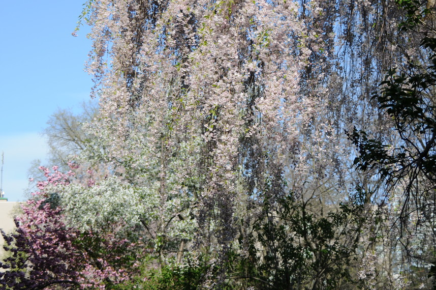 2012年5月 春の北大キャンパス_c0219616_2254579.jpg