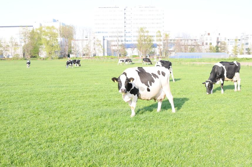2012年5月 春の北大キャンパス_c0219616_2303034.jpg