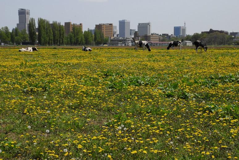 2012年5月 春の北大キャンパス_c0219616_231449.jpg
