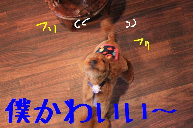 b0130018_22444414.jpg