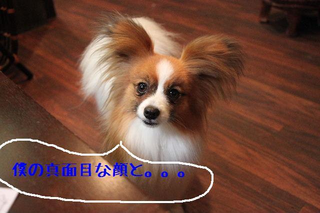b0130018_2303638.jpg