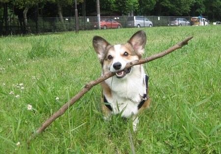 公園で遊んだよ~♪_f0155118_109055.jpg