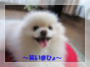 b0167519_9231088.jpg