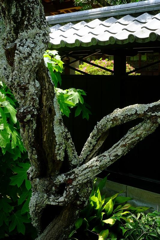 鎌倉 東慶寺_f0050534_8173645.jpg