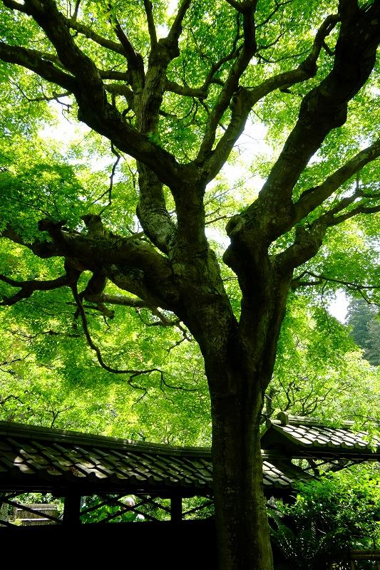 鎌倉 東慶寺_f0050534_8182581.jpg