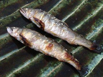 和歌山日高川の若鮎 桜チップのスモークで_e0134337_8365322.jpg