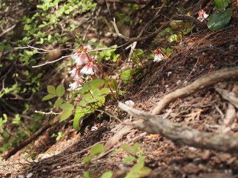 花咲き始めています_f0219043_148374.jpg