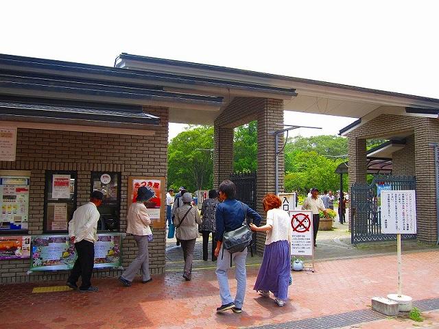 【花の祭典(紹介)】京都府立植物園_e0237645_17381210.jpg