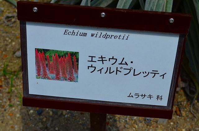 【花の祭典(紹介)】京都府立植物園_e0237645_17384019.jpg