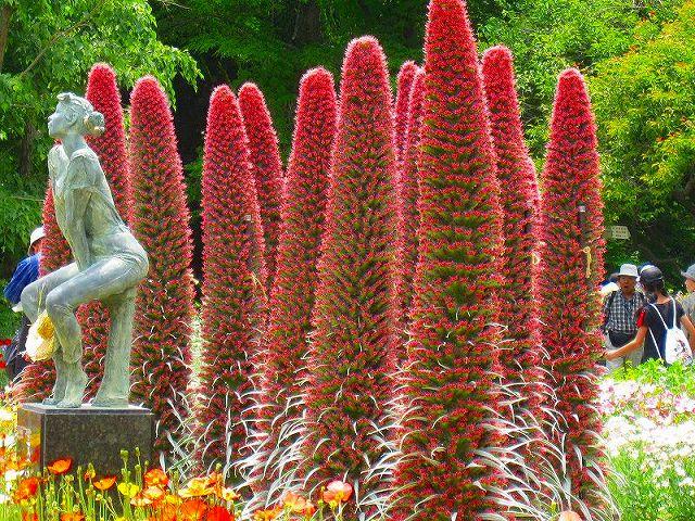 【花の祭典(紹介)】京都府立植物園_e0237645_17385295.jpg
