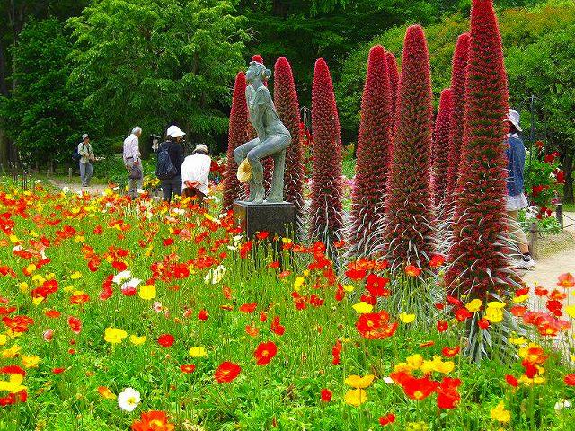 【花の祭典(紹介)】京都府立植物園_e0237645_17391719.jpg