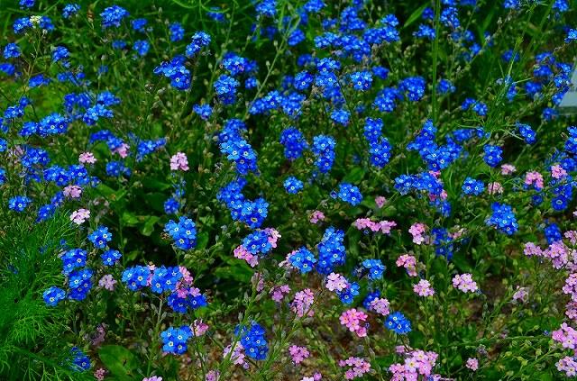 【花の祭典(紹介)】京都府立植物園_e0237645_17402482.jpg