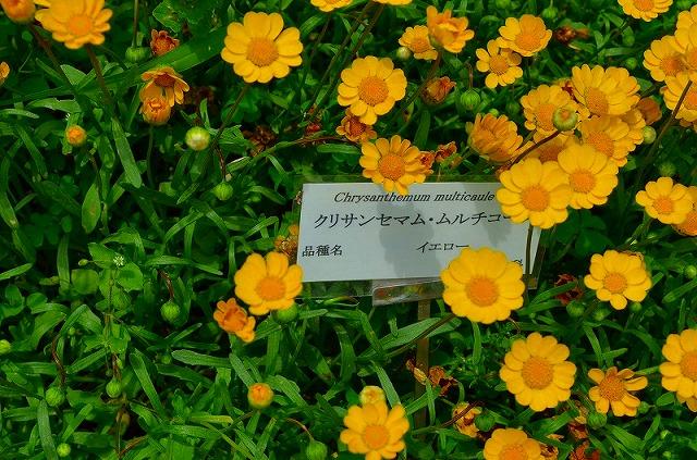 【花の祭典(紹介)】京都府立植物園_e0237645_1740312.jpg