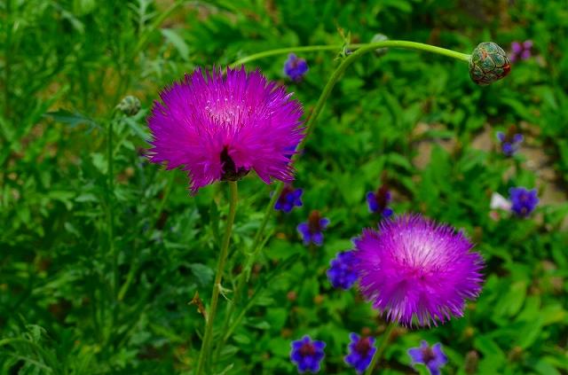 【花の祭典(紹介)】京都府立植物園_e0237645_17415838.jpg