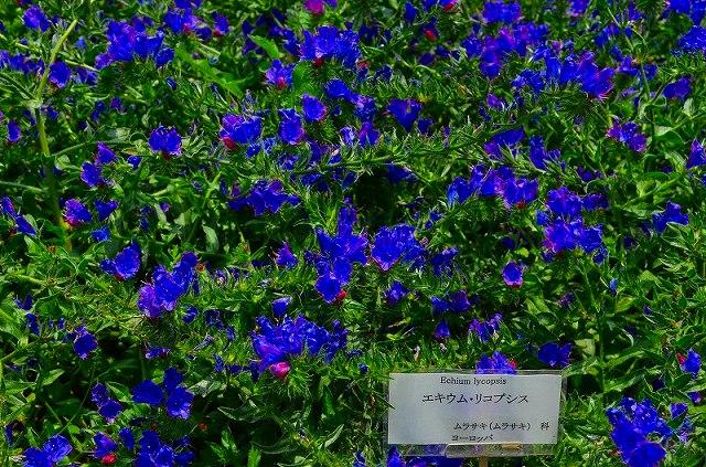 【花の祭典(紹介)】京都府立植物園_e0237645_17431230.jpg