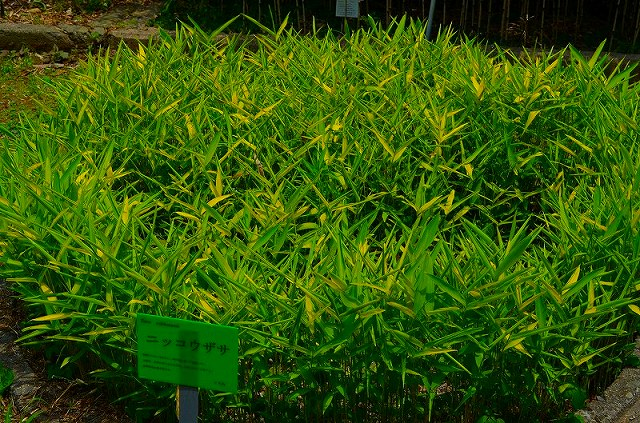 【花の祭典(紹介)】京都府立植物園_e0237645_1744958.jpg