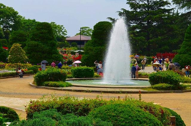 【花の祭典(紹介)】京都府立植物園_e0237645_17454311.jpg
