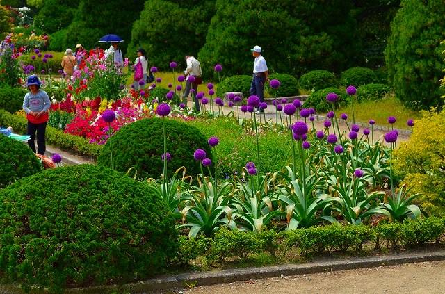 【花の祭典(紹介)】京都府立植物園_e0237645_17455970.jpg