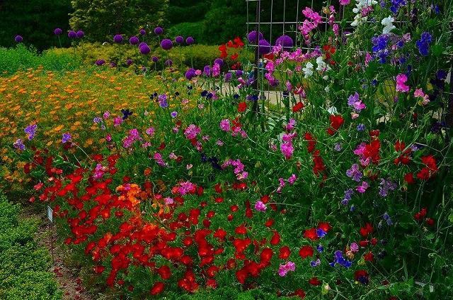 【花の祭典(紹介)】京都府立植物園_e0237645_17463948.jpg